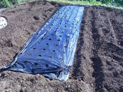 301105玉ねぎの畝作り