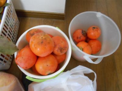 301118富有柿
