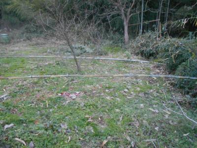 310104竹の切り出し