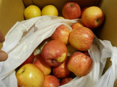 310110貰ったリンゴ