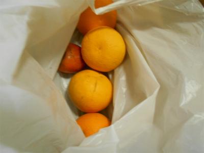 310110貰った柑橘