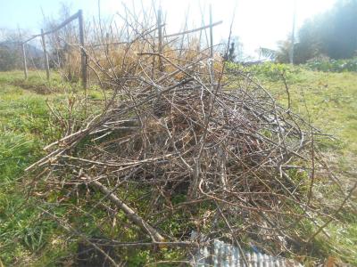 310202剪定枝を集めて