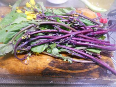 310202収穫した紅菜苔