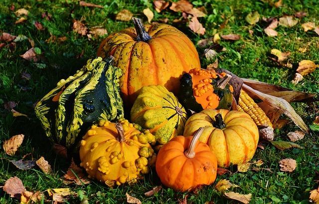 pumpkins-1712841_640.jpg