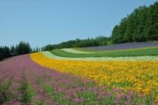 彩りの畑②