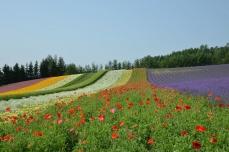 彩りの畑⑤