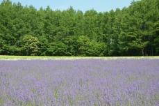 森の彩りの畑