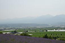 トラディショナルラベンダー畑(国鉄のカレンダー)