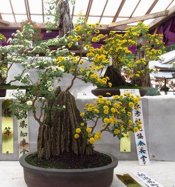 弥彦神社17