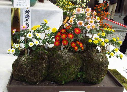 弥彦神社22