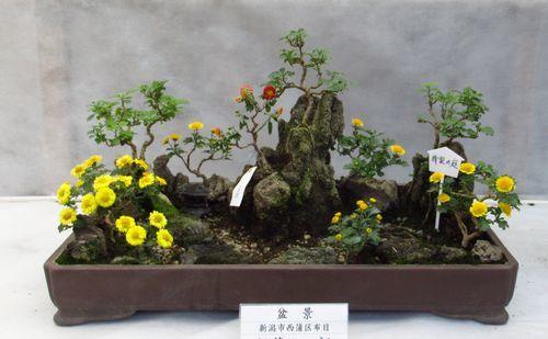 弥彦神社36