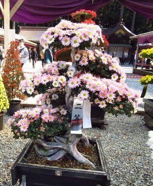 弥彦神社37