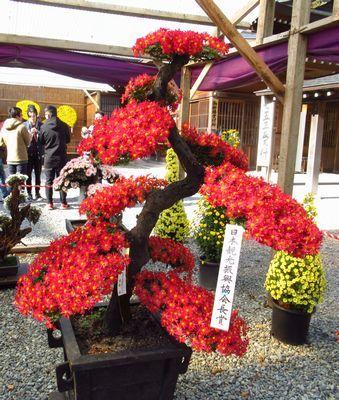 弥彦神社38