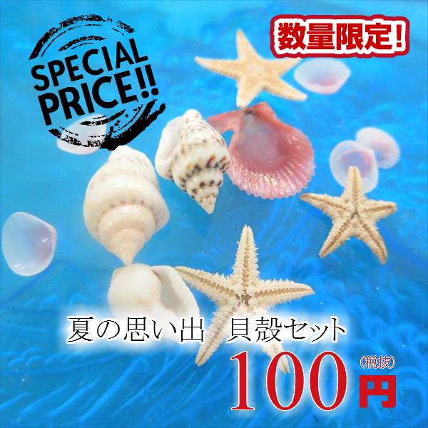 セール夏の思い出貝殻