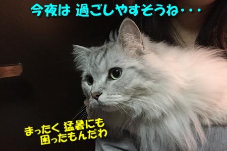 20170812023246b04.jpg
