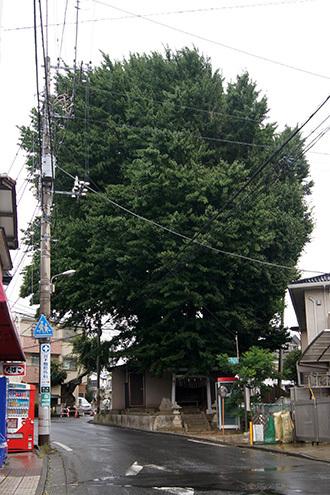 170902船橋道祖神社銀杏①