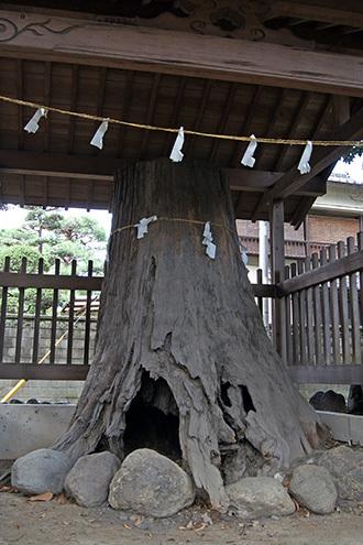 170924箱田神社の御神木①