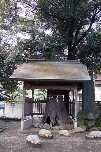 170924箱田神社の御神木③