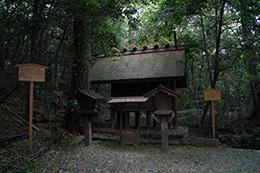 171023熱田神宮の大楠⑫