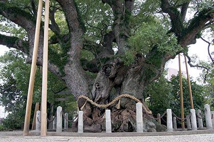 171023愛知 大田の大樟