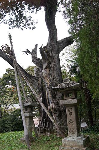 171024鳳来寺ねずの樹⑥