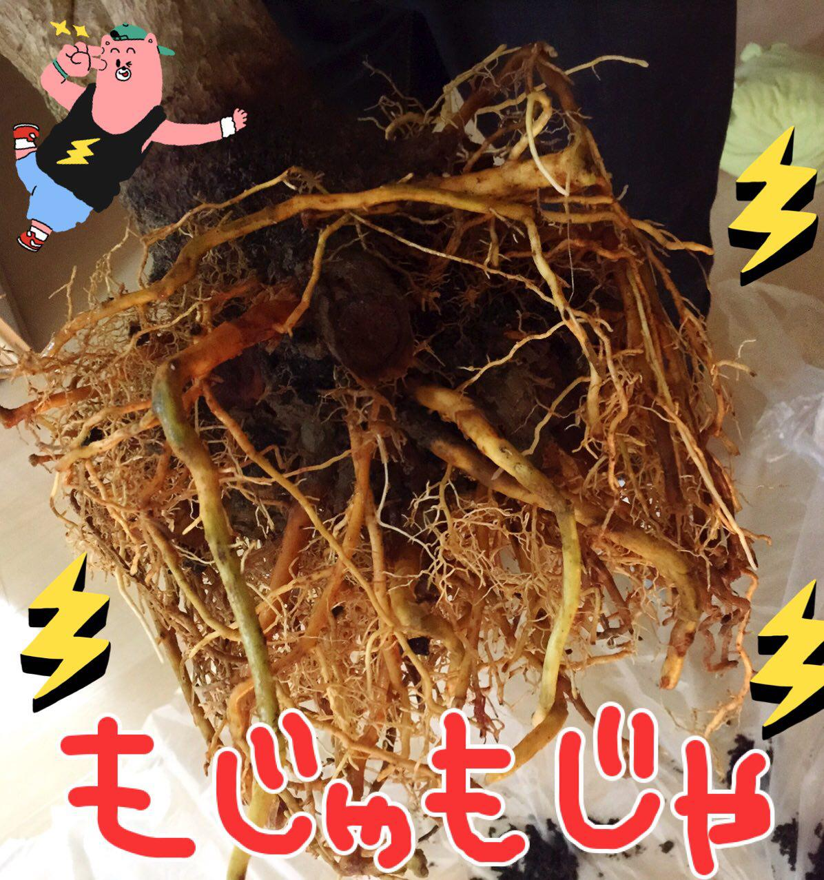 photo_2017-07-14_01-39-55.jpg