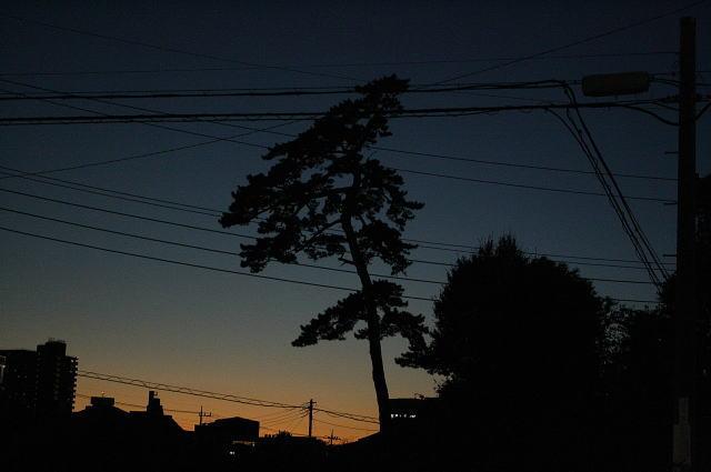 松戸市の松