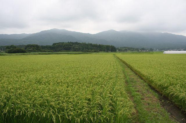 茨城県の自然