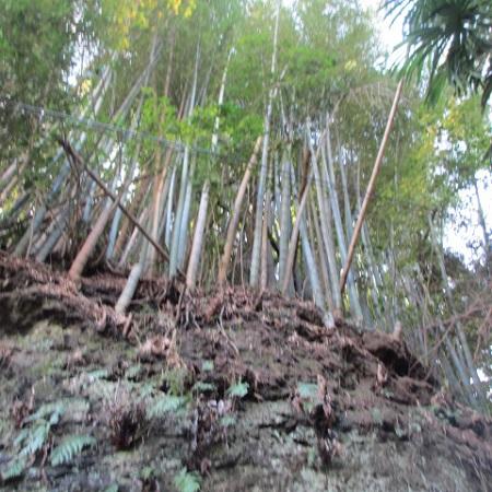 千葉の森①