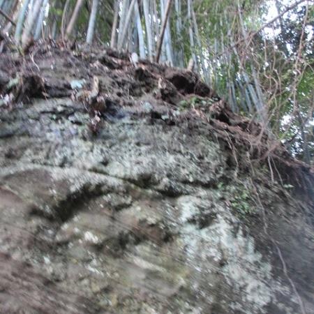 千葉の森③