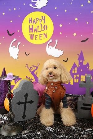 Halloween 2017-10 (1)