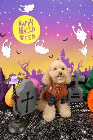 Halloween 2017-10 (2)