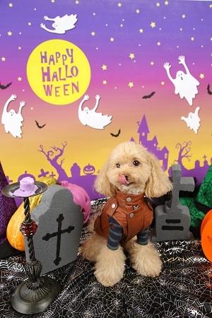 Halloween 2017-10 (3)