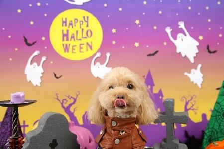 Halloween 2017-10 (4)
