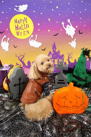 Halloween 2017-10 (5)