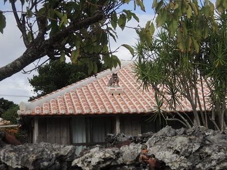 BESS ワンダーデバイス サンダーバード2号 沖縄2017 8