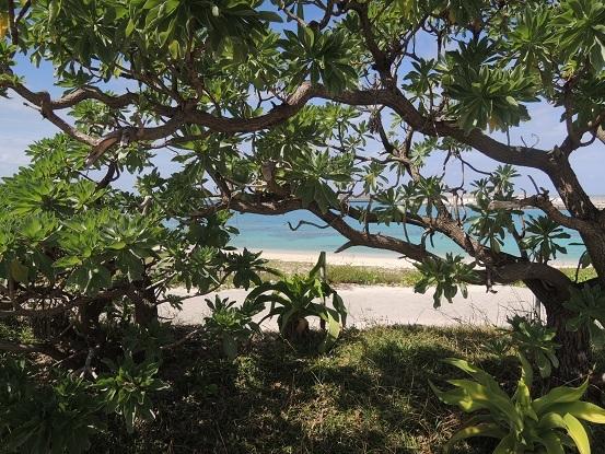 BESS ワンダーデバイス サンダーバード2号 沖縄2017 72