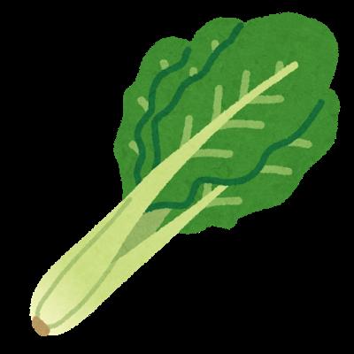 野菜、小松菜