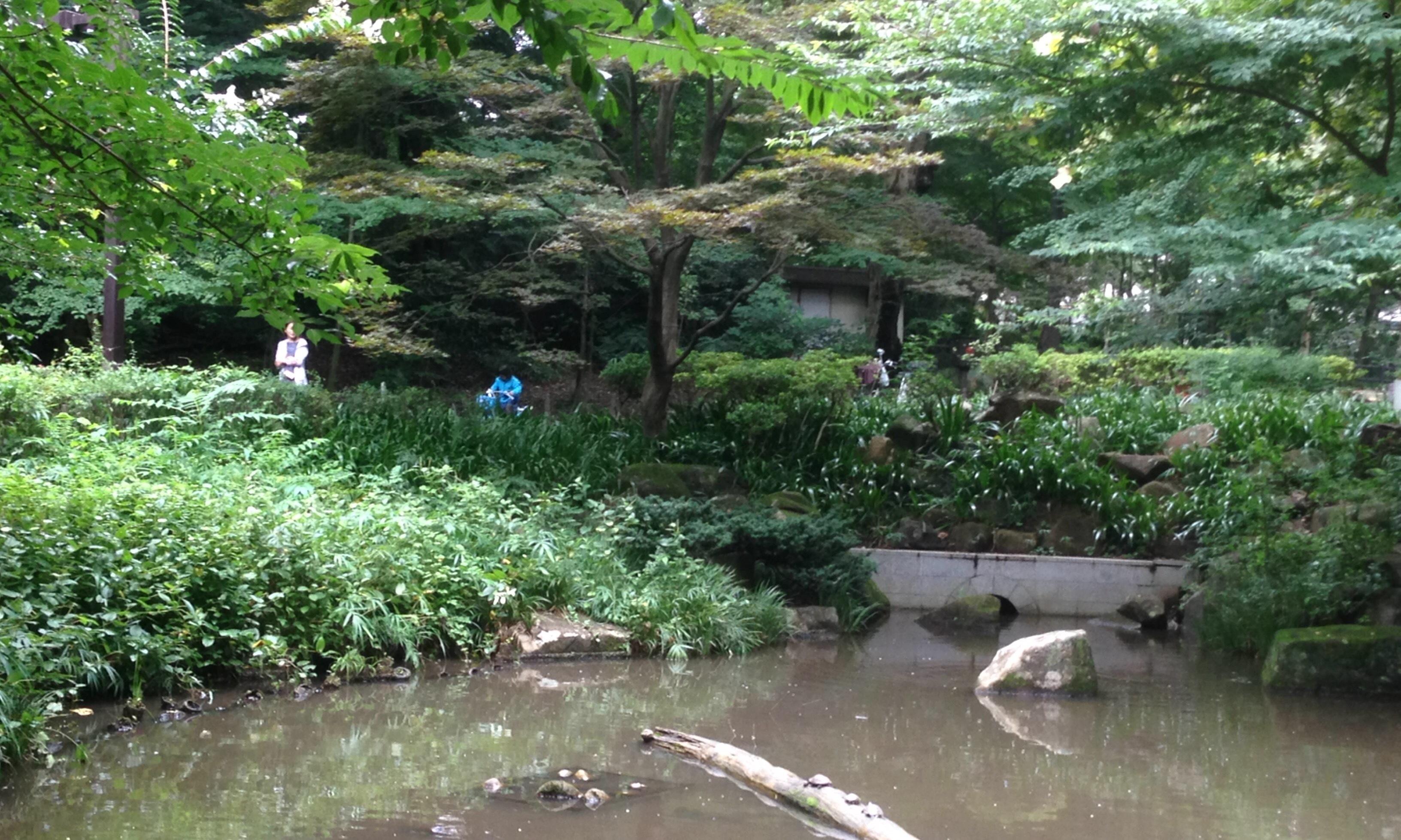 林試の森公園 池