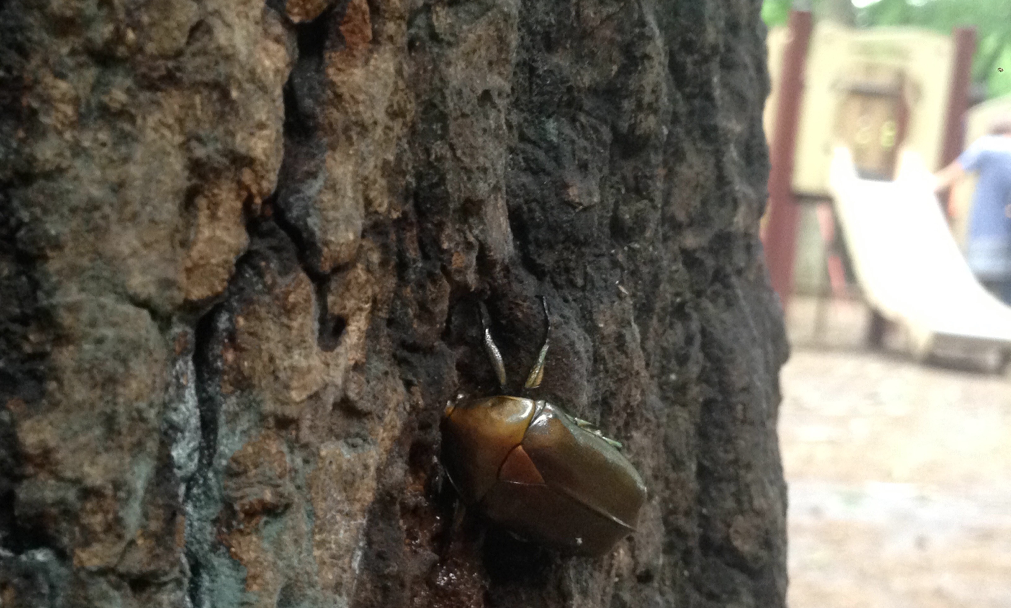 林試の森公園 樹液