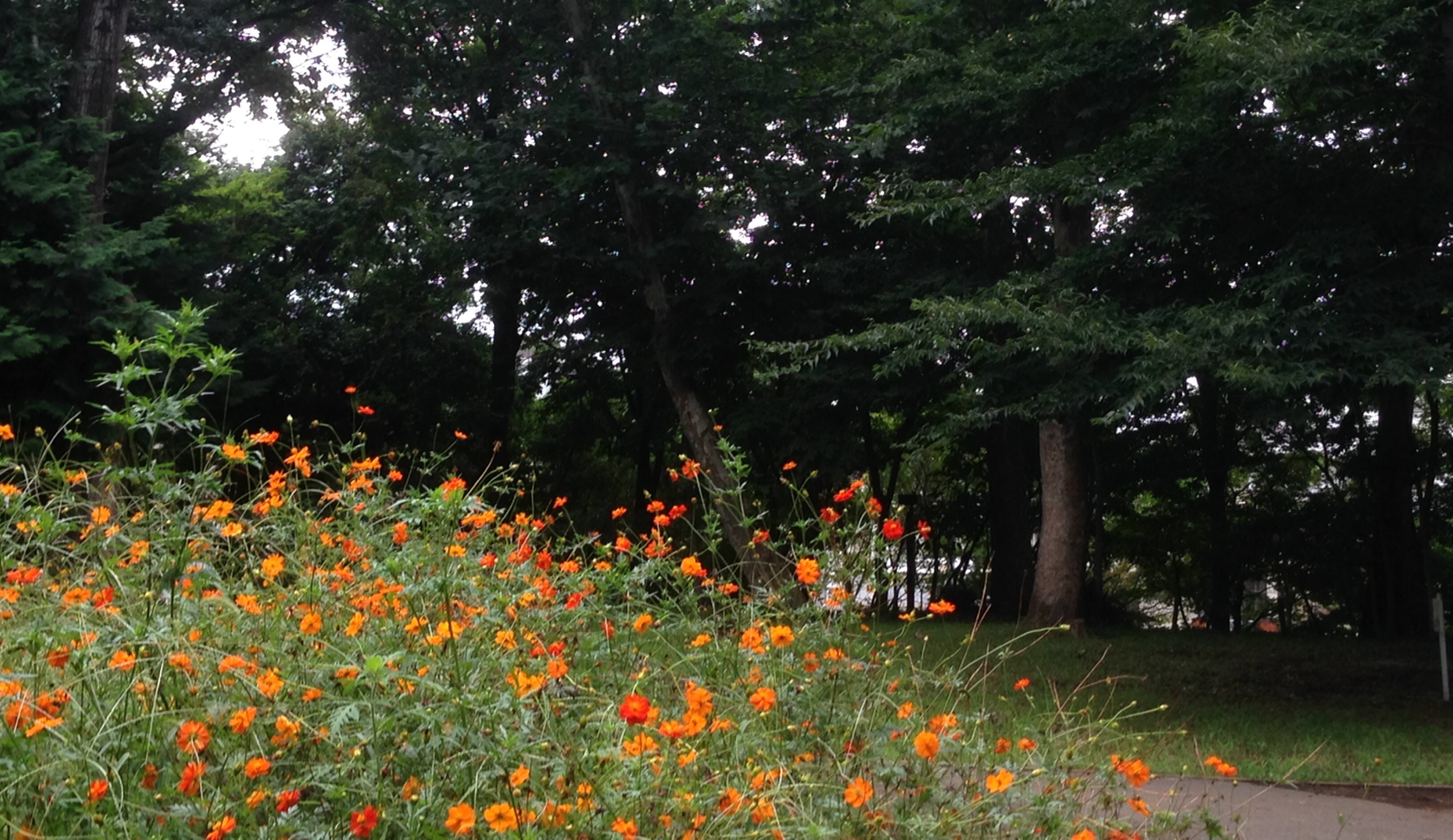 林試の森公園 花