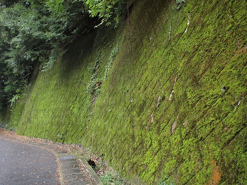 500世界遺産の苔と普通の苔4