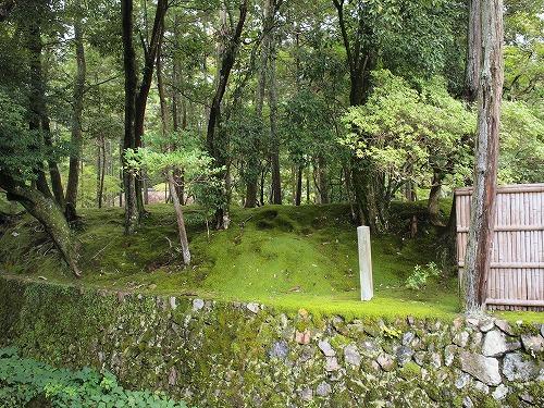 500世界遺産の苔と普通の苔3