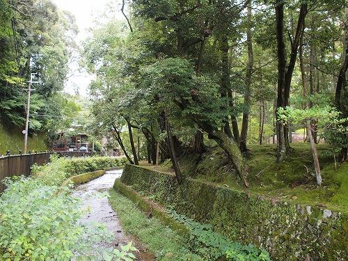 500世界遺産の苔と普通の苔2