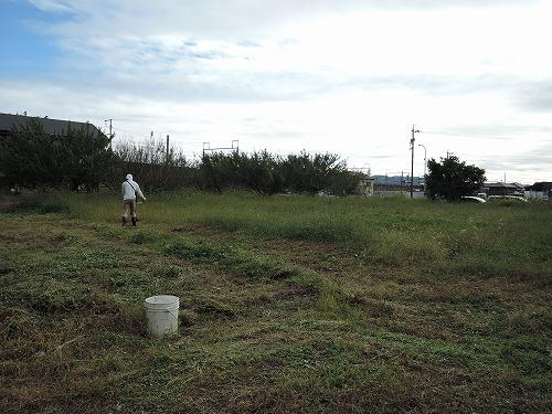 500草刈り3