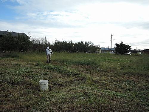 500草刈り2
