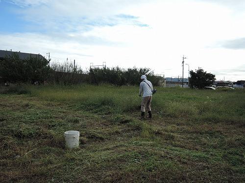 500草刈り1