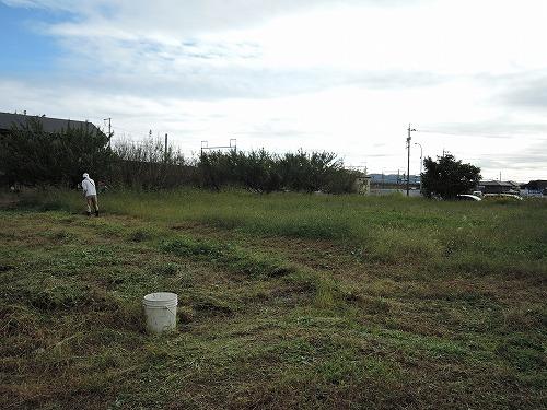 500草刈り4