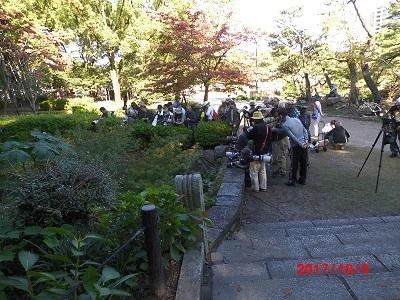 鶴舞公園にオオヨシゴイ騒ぎ201410081