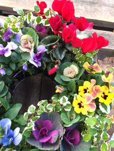 冬のお花いっぱい♪